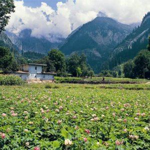 Matiltan (Ushu), Upper Swat