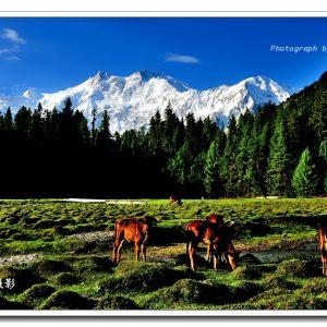 Nanga Parbat (1)